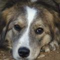 Los perros pueden ayudar a aliviar los síntomas de depresión