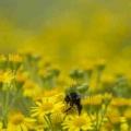 La sequía, secos temporada buenas razones para ataques de alergia