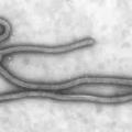 Ébola cifra de muertos en África pasa 10,000 ya que los vientos hacia abajo