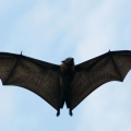Ocho niños necesitan vacunas contra la rabia después de murciélago es traído a la escuela