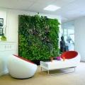 Los empleados que trabajan en una habitación con las plantas son más productivas, dice estudio