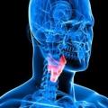 Alimentos que mejoran la salud de la tiroides