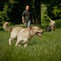 Frankie el perro huele el cáncer de tiroides
