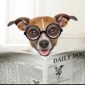 ¿Cómo tratar la diarrea del perro? (En casa)