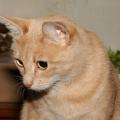 Cumplir 124 años de edad, de pana, gato vivo más viejo del mundo [video]