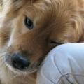 Tener una mascota beneficioso para la salud y el bienestar