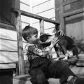 Mascotas ayudan a proteger a los niños contra las alergias