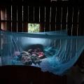 Nuevo compuesto prometedor puede vencer a la malaria por $ 1 una dosis