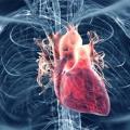 Top 15 superalimentos para la presión arterial alta