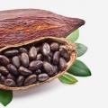 17 ventajas asombrosas de cacao para la piel, el cabello y Salud