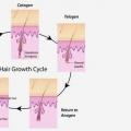 3 fases del ciclo de crecimiento del pelo