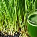 5 mejores beneficios del jugo de pasto de trigo para la piel, el cabello y Salud