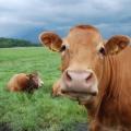 Una respuesta a la carne de vacuno nolan ryan: segunda parte