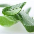 Salud y belleza beneficios del aloe vera, gel de aloe vera, jugo de aloe vera