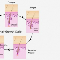 /uploads/blockpro/200x200/2015-11/200x200_crop_3-phases-of-hair-growth-cycle_1.jpg