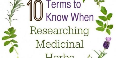 10 Reglas para saber cuando la investigación de plantas medicinales