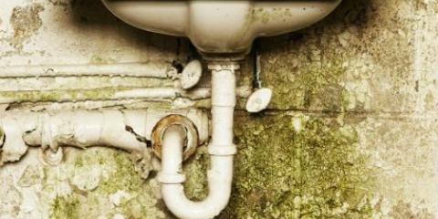 6 maneras naturales para deshacerse de su casa de moho y hongos