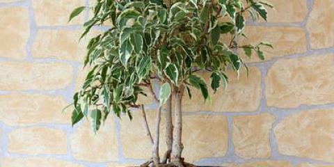 10 mejores plantas puede hacer crecer en interiores para la purificación del aire