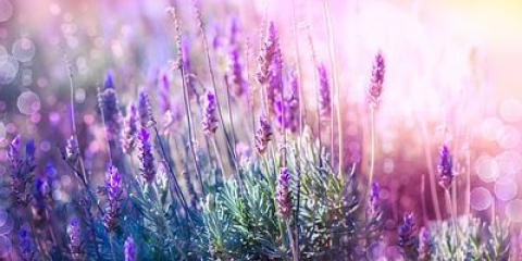 10 hierbas medicinales se pueden cultivar en casa