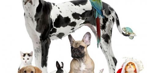 7 comunes problemas de animal doméstico del verano - una solución